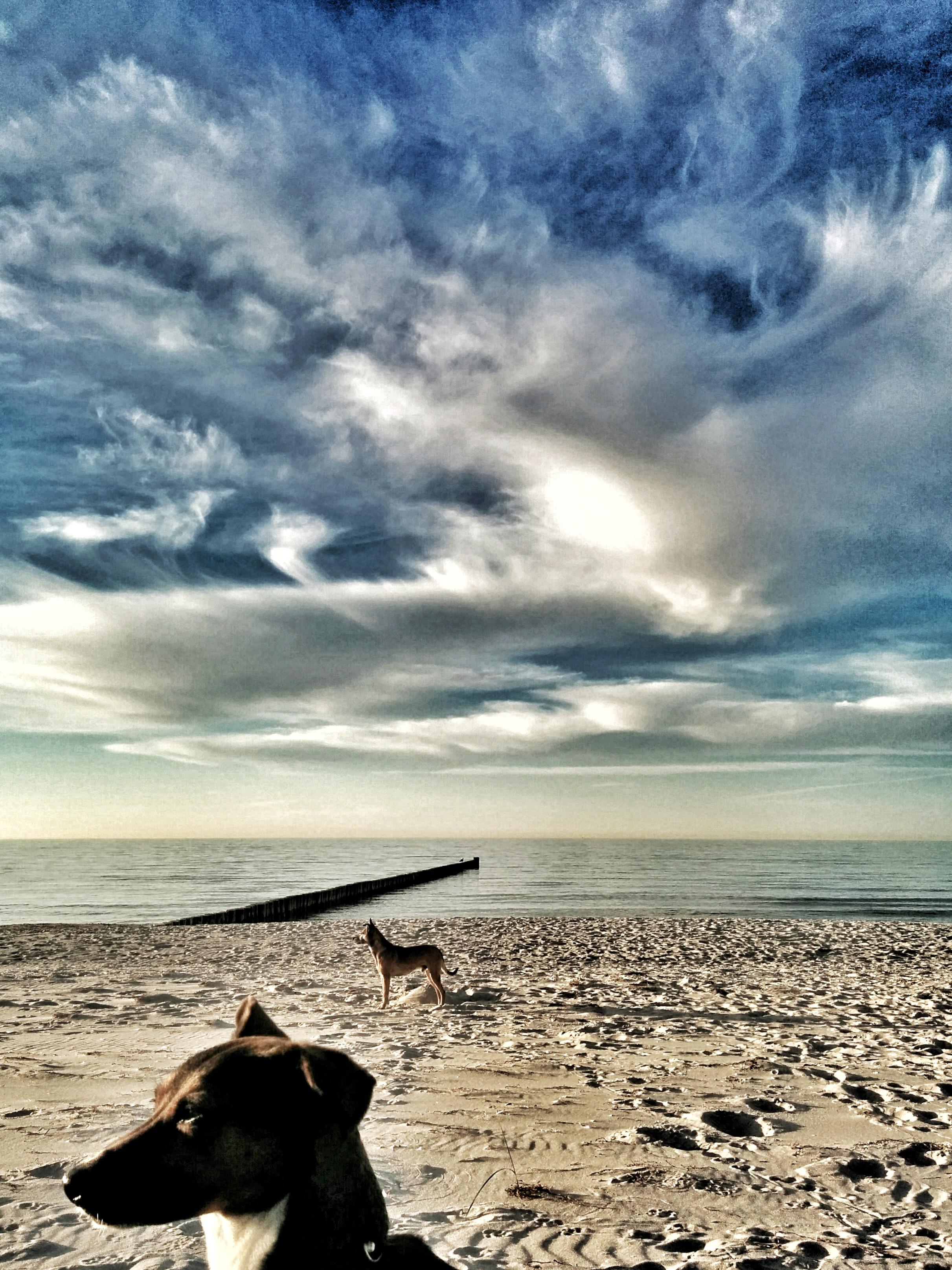 Nordstrand Prerow mit Hund